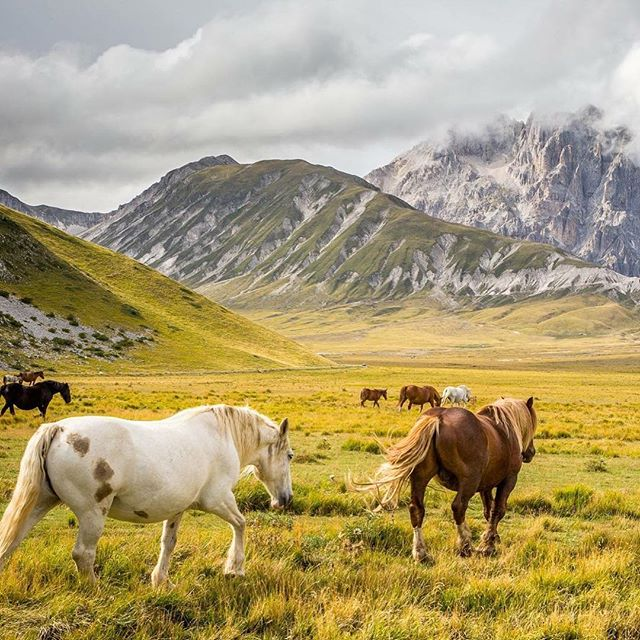 Campo Imperatore, Abruzzo, Italy. #wanderlust #travel #italy #italia #highlands #instatravel #mountains #horses #passionpassport #europe #traveling